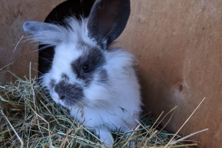 Adopt A Rabbit Animal Rescue And Care