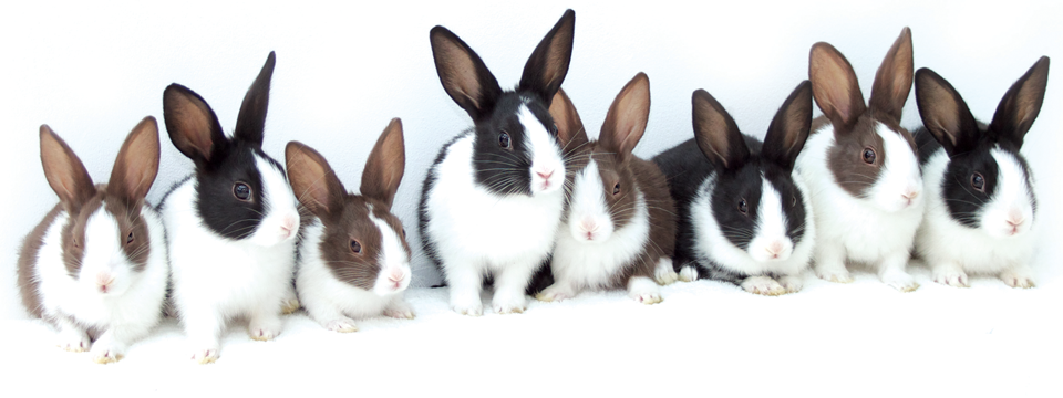 An Update on Rabbit Haemorrhagic Disease