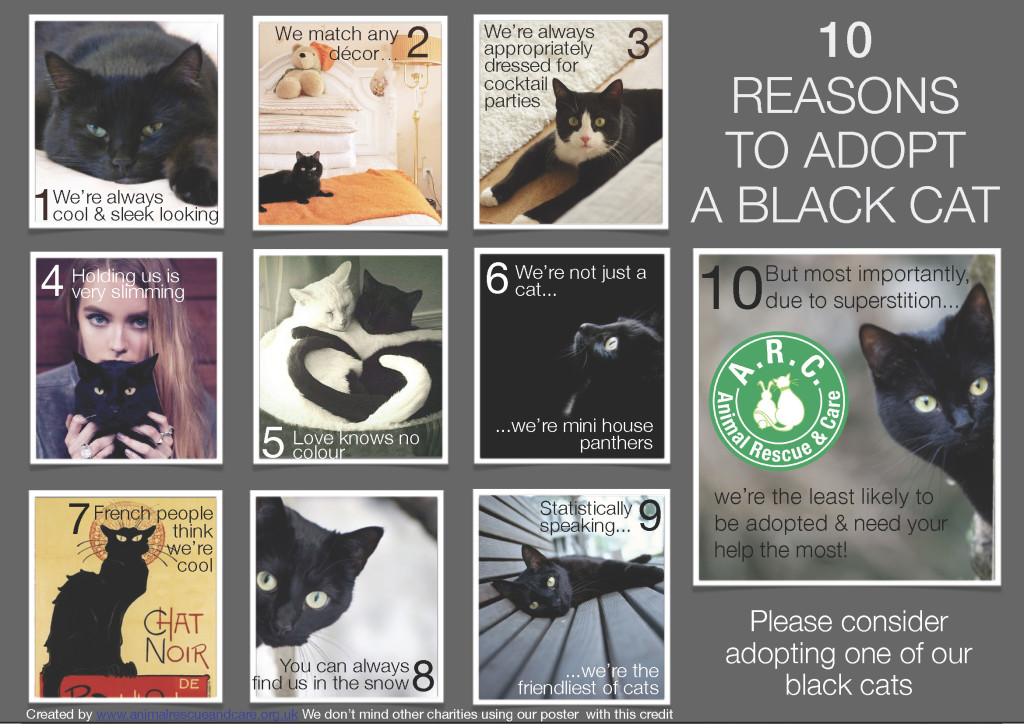 Black Cat WEBSITE